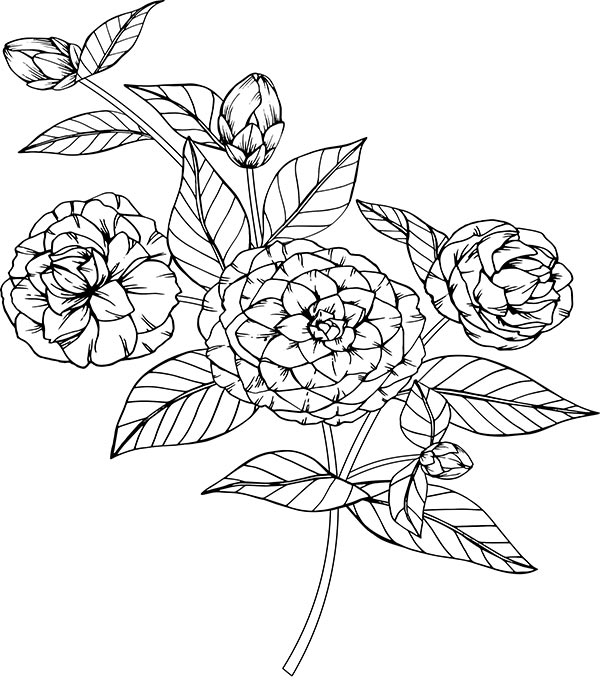 Floral_coloring_page