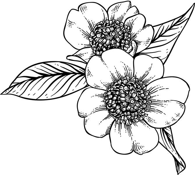 Floral_coloring_pages