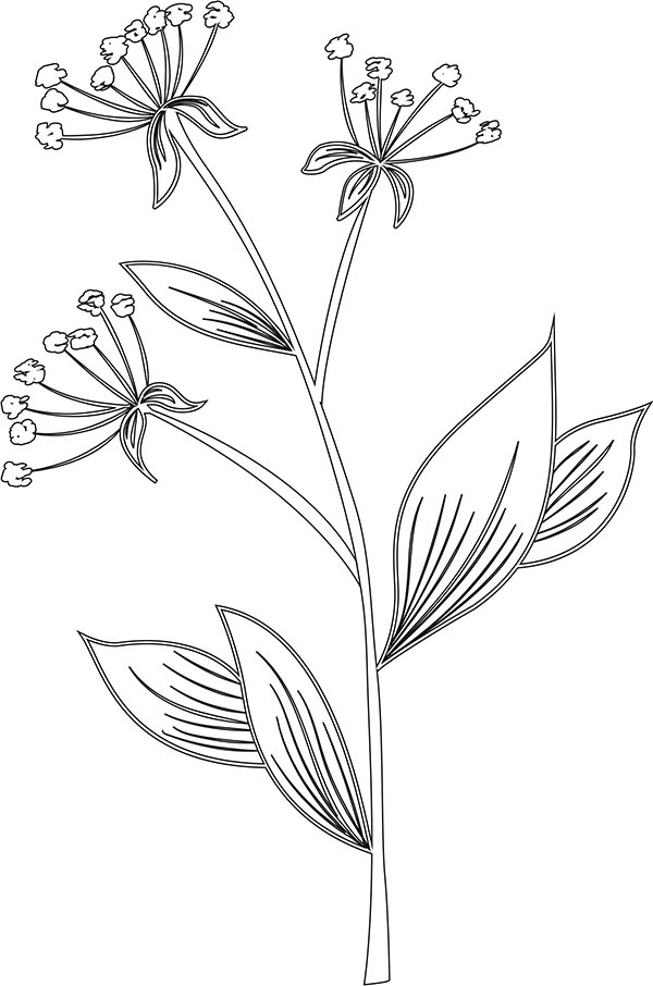 Floral_coloring_pages_24
