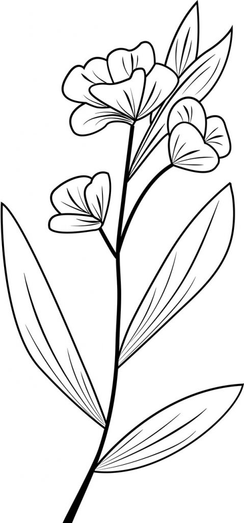 Floral_coloring_pages_25