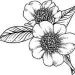 Floral_coloring_pages_thumb_19